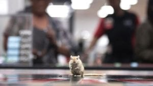 rodent roulette casino game